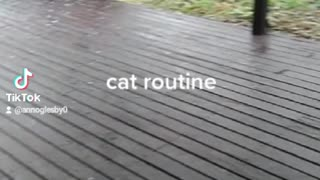 Cats routine