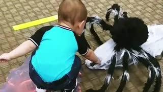Kid Scared by Halloween Spider