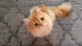 SLow Motion Cat Licking her tonge