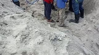 Stray Dog Rescue Operation