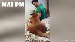 Funny confused pets
