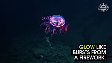 Check Out This Firework Jellyfish