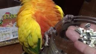 Birdseed Makes Me Happy