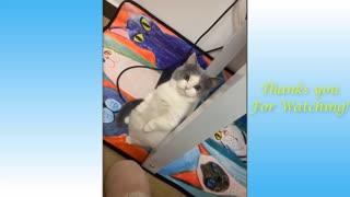 Recopilación de Mascotas graciosas
