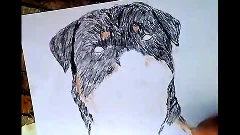 Drawing Colored Rottweiler Head