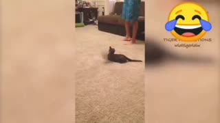 What a scared cat.