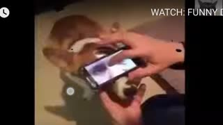 WATCH: FUNNY DOGS