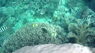 Climate change killing world's coral reefs - study