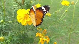 beautiful butterfly on a flower 2021