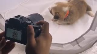 Cute puppy is truly enjoying photo session