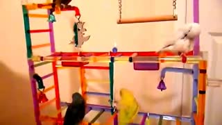 4 Cute Parrots Playing Together