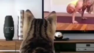 Cat learn yoga