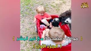 Funny animal jokes positions