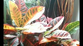 My indoor jungle sanctuary