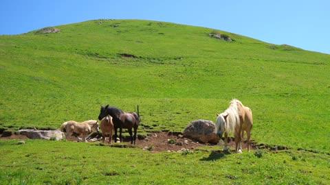 Blonde foal