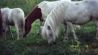 Very beautiful white horses