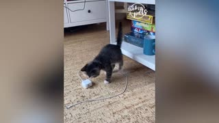 Funny Unexpected Dogs And Cats Reactions