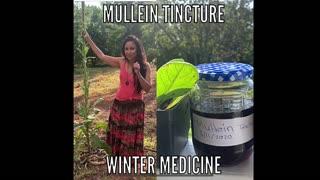 Making Mullein Tincture