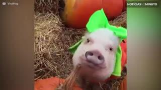 Estes animais já estão prontos para o Halloween