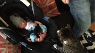 Cats Meeting Babies 4 the FIRST Time