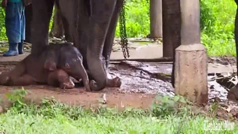 A New Birth for An Elephant Animal Now