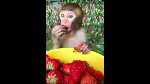 I catch a glimpse of the monkey eating strawberries