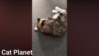 Best Funny Cats Video Compilation 2021- cute cats comedy
