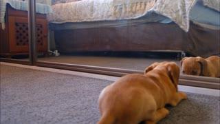 HILARIOUS Dog Scares Himself