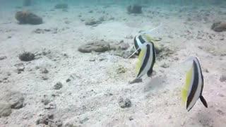 Bizar Female Fishes Gets Releaved In Bottom Of ocean
