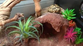 House turtle