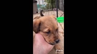 Hilarious Animal Videos Compilations