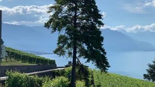 Lac Léman vue de de Chexbres