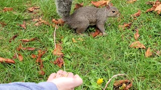 Squirrel eating. Woo