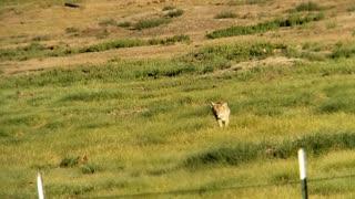 Prairie dogs lucky day