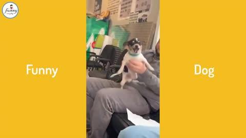 Funny cachorro
