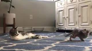 A cat without paws plays with a kitten