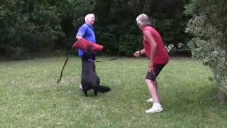 How to make your aggressive Dog In 1 week