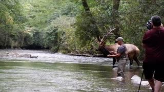 Beautiful Bull Elk by Fly Fisherman
