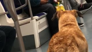 Old guy blue shirt telling brown dog to come over subway train