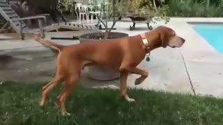 Statue Dog Revived