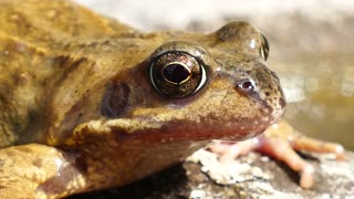 Frogs Animals Amphibian