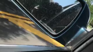 Great Dane Car Ride