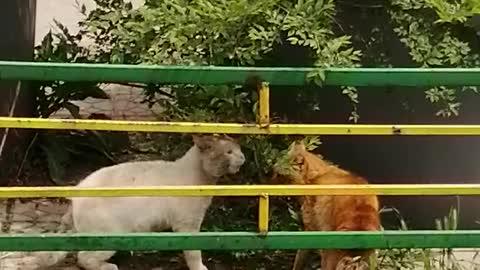 "Wild cats in the ""new civilization"""