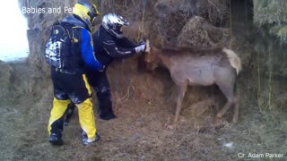 Funny Different Animals Chasing and Scaring People 2021 2021