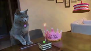 Cat celebrates birthday