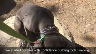 Building Confidence In A Fearful Dog