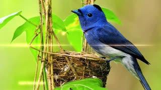Bird Singing lovely