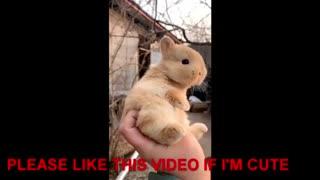 Cute adorable little Rabbits