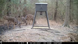 Bobcat and Friends