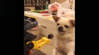 Funny Cute pets. watch and enjoy